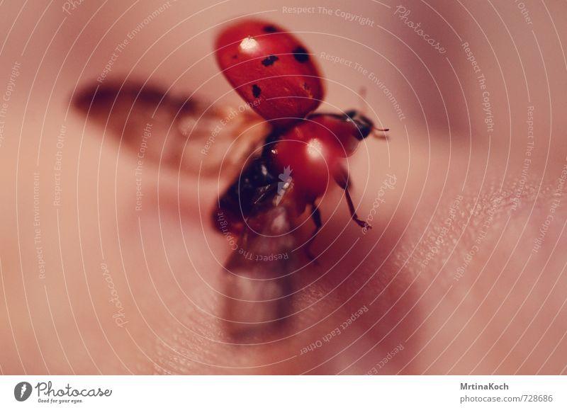 und tschüss. Sommer Hand Tier Herbst Frühling Glück fliegen Haut Wildtier ästhetisch Flügel Kontakt Insekt Abheben Käfer Marienkäfer