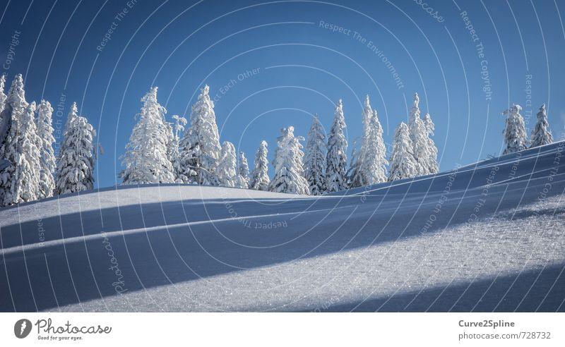 Schneewelle Himmel Natur Baum Winter Wald Berge u. Gebirge Schnee Eis Wellen Zufriedenheit ästhetisch Schönes Wetter Frost Wolkenloser Himmel Schneelandschaft