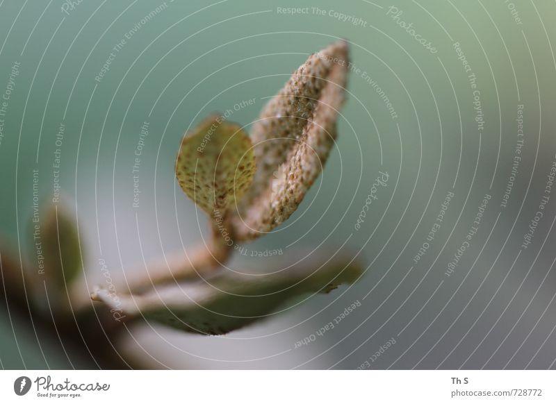 Pflanze Natur ruhig Blatt Umwelt natürlich elegant Design Zufriedenheit authentisch ästhetisch Blühend einzigartig Gelassenheit harmonisch geduldig
