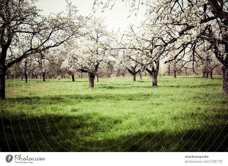 blütezeit Umwelt Natur Landschaft Pflanze Tier Sonnenlicht Frühling Schönes Wetter Baum Blume Gras Sträucher Grünpflanze Nutzpflanze Wildpflanze Blüte Blühend