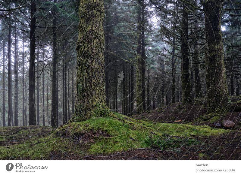 bodenständig Landschaft Pflanze Klima Wetter schlechtes Wetter Nebel Baum Gras Moos Wald Hügel Berge u. Gebirge grau grün Farbfoto Außenaufnahme Menschenleer