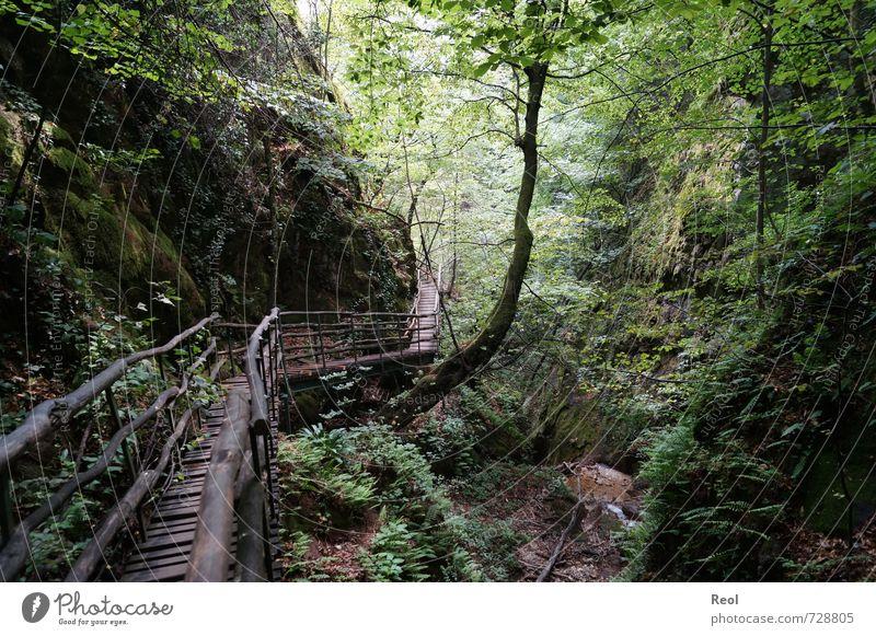 In den Wald ... wandern Natur Landschaft Pflanze Erde Schönes Wetter Baum Sträucher Moos Farn Wildpflanze Urwald Schlucht Felsenschlucht Laubwald Bewegung alt