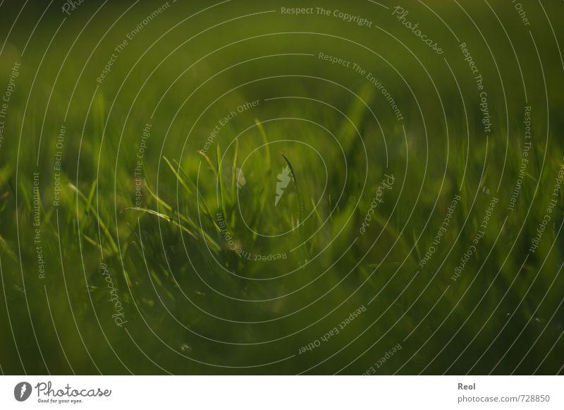 Frühlingserwachen Natur grün Pflanze Umwelt Wiese Gras Garten Erde Schönes Wetter Grünpflanze