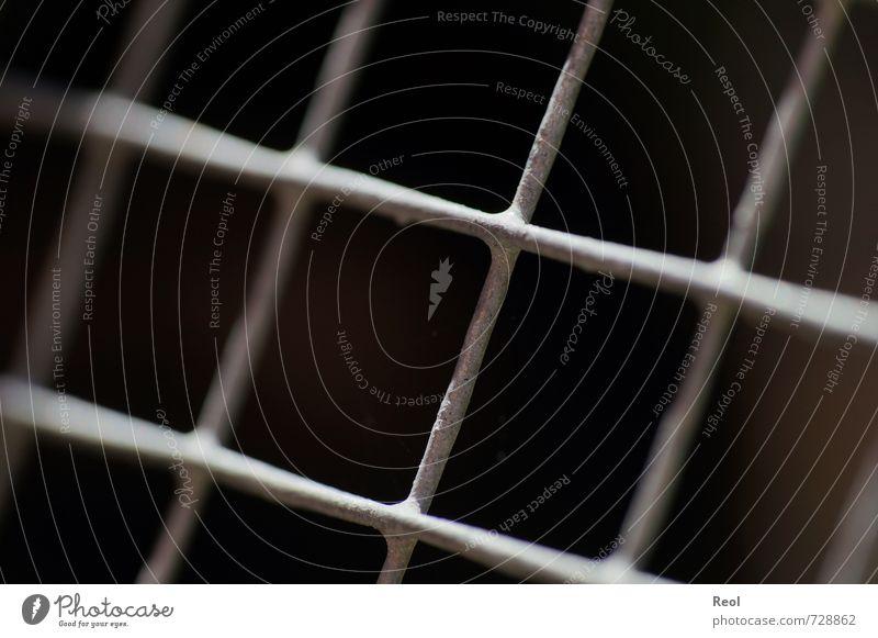 Gefangen Haustier Gitter Gitternetz Zaun Gehege Stall Gitterstäbe Justizvollzugsanstalt Metall Stahl bizarr Missgeschick gefangen eingeschlossen eingezäunt