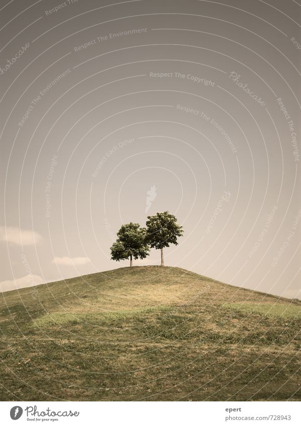 Gemeinsam einsam Natur Landschaft Pflanze Baum Gras Park Wiese Hügel stehen Wachstum warten einfach frei oben Geborgenheit loyal Freundschaft Zusammensein Treue