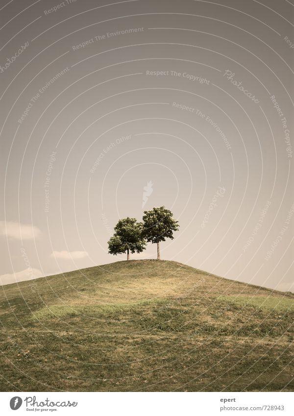 Gemeinsam einsam Natur Pflanze Baum Landschaft ruhig Wiese Gras oben Freundschaft Park Zusammensein Ordnung Wachstum frei warten stehen