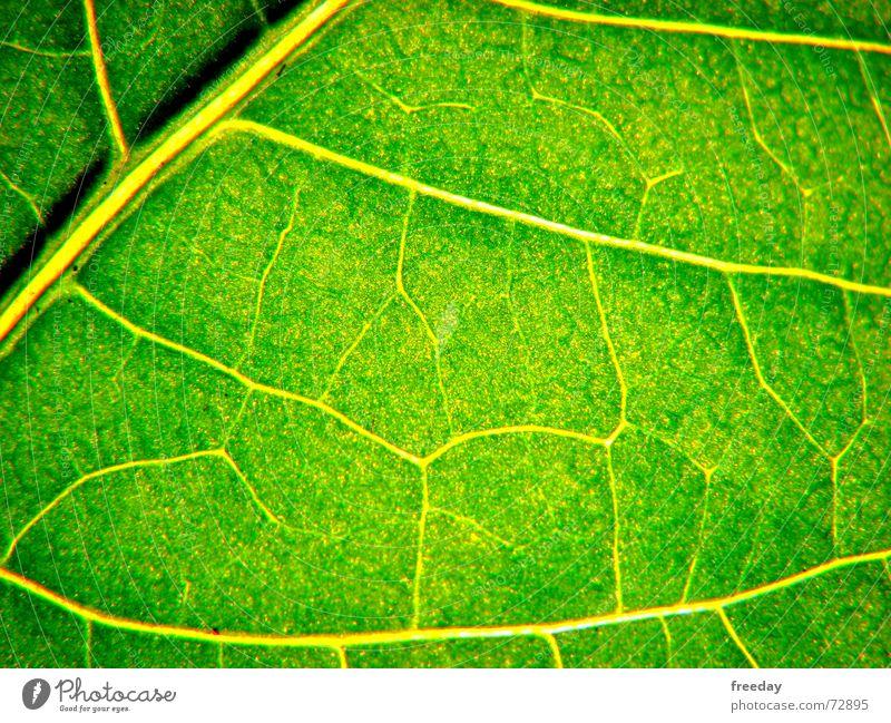 ::: Saftiges Grün 2 ::: Natur Pflanze grün Baum Blatt Umwelt Leben Gefühle Hintergrundbild Kraft Sträucher verrückt geschlossen Ast Romantik nah