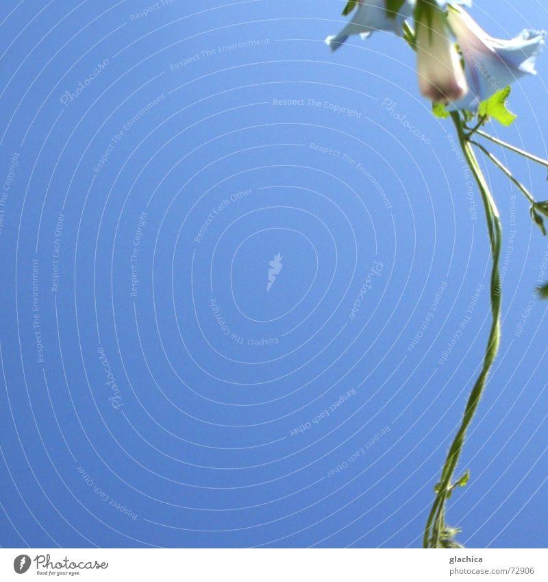 Letzte Sommertage II Natur schön Himmel Blume grün blau Pflanze Sommer Herbst Blüte Garten Wind Horizont violett Klettern zart