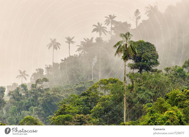 Natur Ferien & Urlaub & Reisen Pflanze Baum Einsamkeit Landschaft Wolken Wald Berge u. Gebirge Umwelt Freiheit Regen Tourismus Nebel nass Abenteuer
