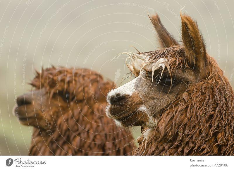 Natur Ferien & Urlaub & Reisen Tier Ferne Umwelt lustig Tourismus Freundlichkeit Neugier Gelassenheit nah Tiergesicht exotisch Stress selbstbewußt Stolz