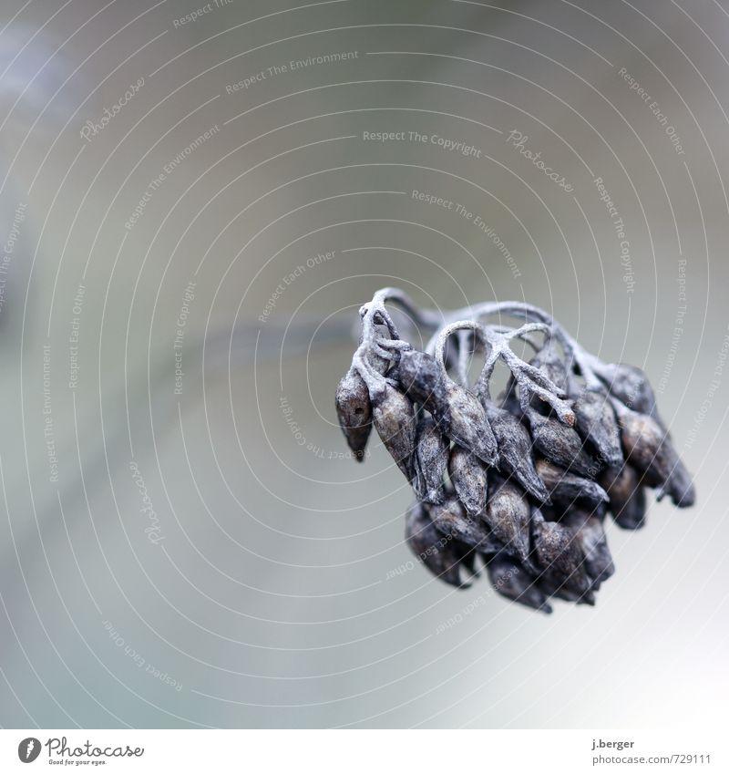 """abhängen Natur Pflanze Herbst Gras Sträucher Blüte dehydrieren braun grau beige """"verwelken,"""" vertrocknet Makroaufnahme Gedeckte Farben Außenaufnahme Nahaufnahme"""
