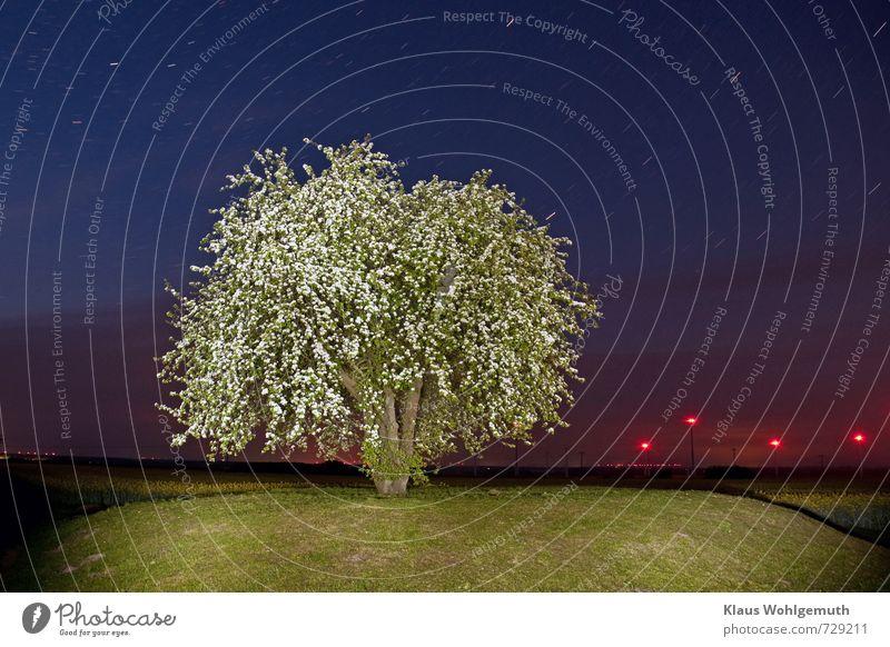 Nachts auf dem Mühlenberg Fortschritt Zukunft Energiewirtschaft Windkraftanlage Umwelt Natur Landschaft Himmel Nachthimmel Stern Horizont Baum Gras Blüte