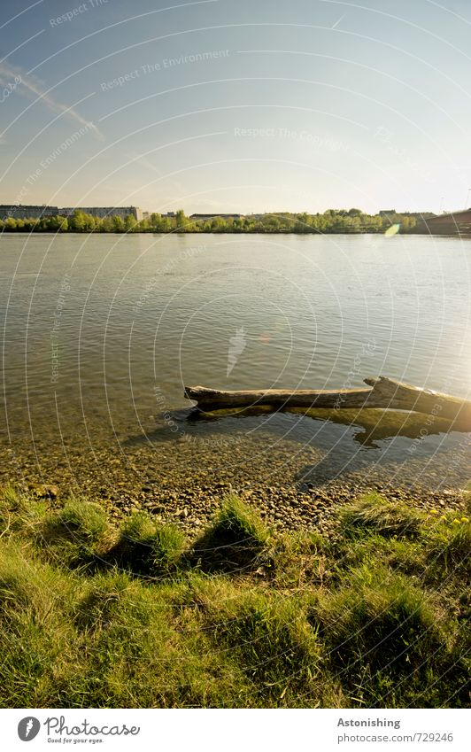 Donau Umwelt Natur Landschaft Pflanze Himmel Horizont Sonne Sonnenlicht Frühling Wetter Schönes Wetter Wärme Gras Wiese Flussufer Holz hell nass schön blau
