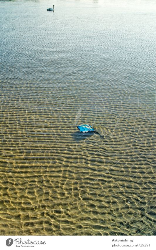 Müll im Wasser Umwelt Natur Landschaft Frühling Tier Wildtier Schwan 1 Schwimmen & Baden nass blau braun Boden Ferne Muster Wellen Strukturen & Formen Sand