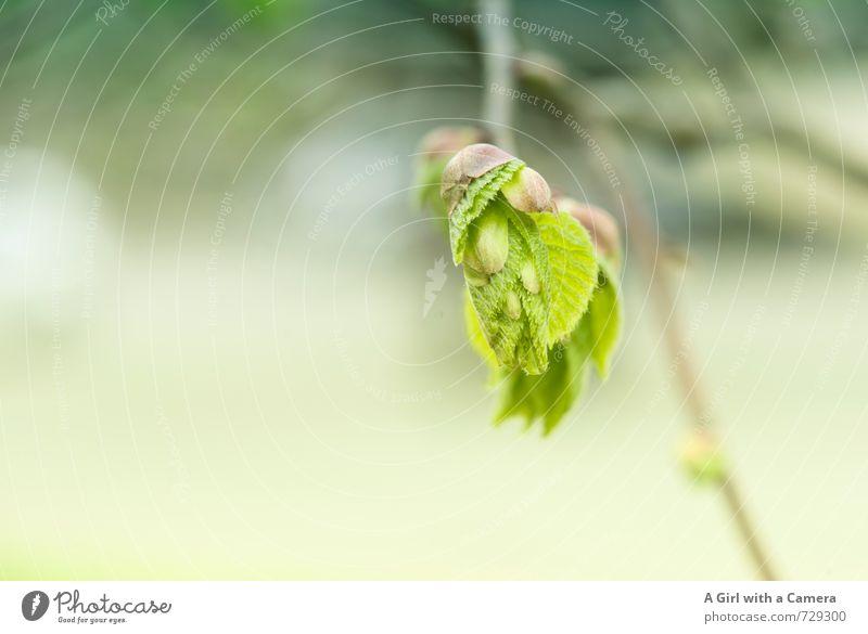 AST 7 - I'm new here Umwelt Natur Pflanze Frühling Baum Blatt Blütenknospen Garten Park Wald Wachstum frisch einzigartig natürlich grün entfalten platzen