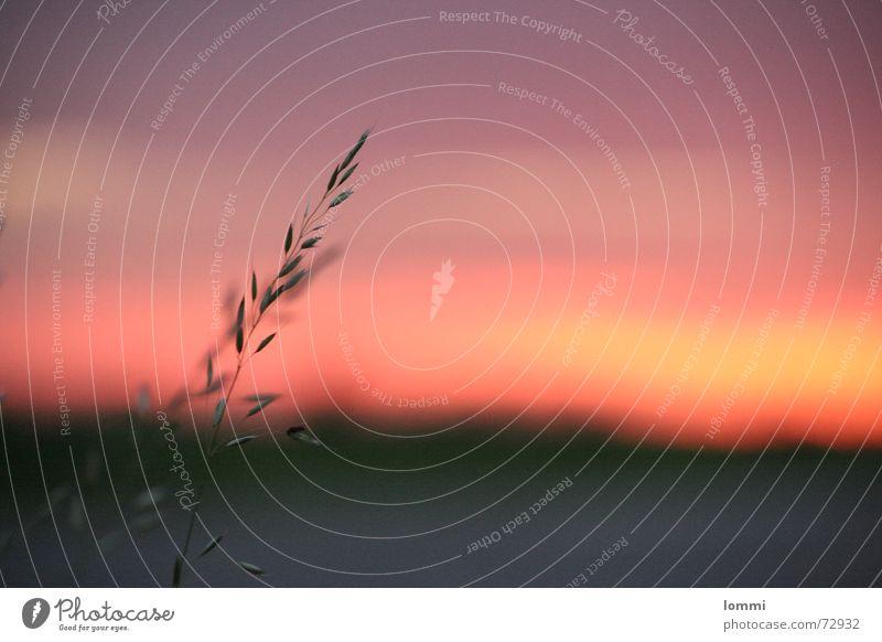 Sonnen Untergang Himmel rot Sommer ruhig Wolken Erholung träumen Feierabend