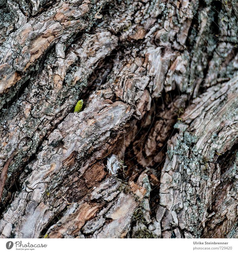 AST 7 | Neugierig aufs Leben Natur Pflanze grün Baum Einsamkeit Blatt Wald Umwelt Frühling natürlich klein braun Feld Wachstum Kraft Erfolg