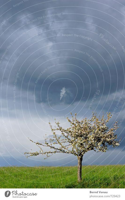 Kommt was Himmel blau Pflanze Sonne Baum Landschaft Wolken dunkel Frühling Blüte Wetter Regen einzeln bedrohlich Rasen Tiefenschärfe