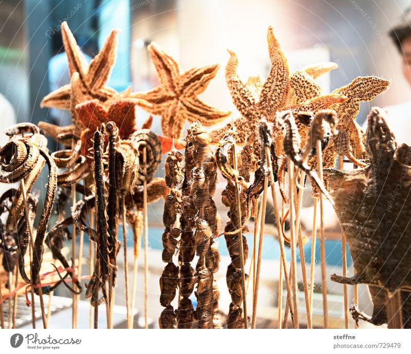 Ihn China essen sie ... Lebensmittel Ernährung Asiatische Küche authentisch außergewöhnlich Ekel lecker verrückt Seestern Skorpion aufgespiesst Seepferdchen