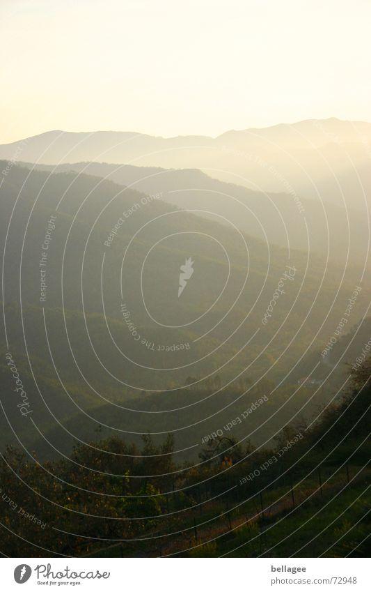 dünstig Nebel gelb Horizont grün Hügel Gras Sträucher Italien Ligurien Sonnenuntergang Berge u. Gebirge Landschaft Silhouette Schatten