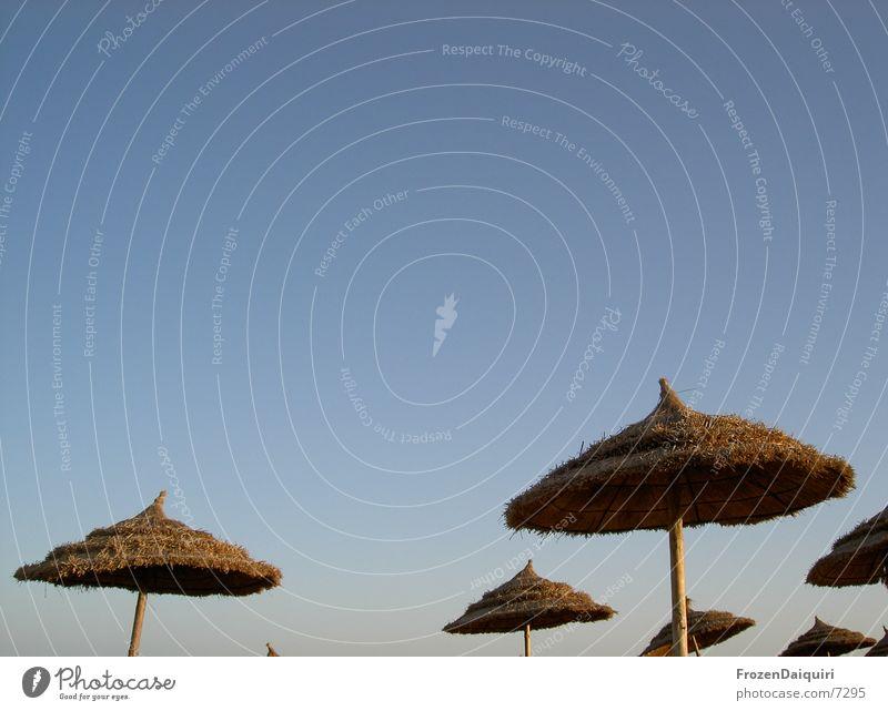 Sonnenschirmpilze? Himmel Ferien & Urlaub & Reisen Nebel frei Freizeit & Hobby München Sonnenschirm Sonnenbad Gedanke Abenddämmerung Blauer Himmel Stroh Afrika Tunesien