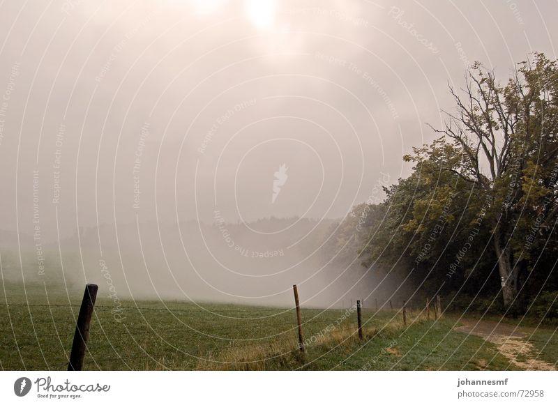 Nebelloch Himmel Baum Wiese Wege & Pfade Nebel Schilder & Markierungen Zaun mystisch Verhext Schwäbische Alb