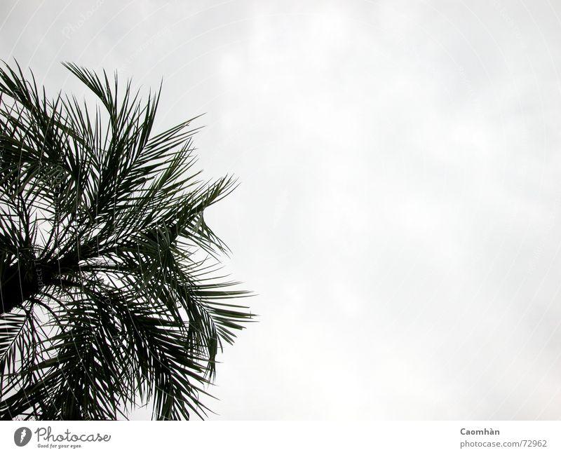 tropische Zierpflanze Himmel Ferien & Urlaub & Reisen schön Pflanze Meer Strand Freiheit Sand fliegen Urwald Palme