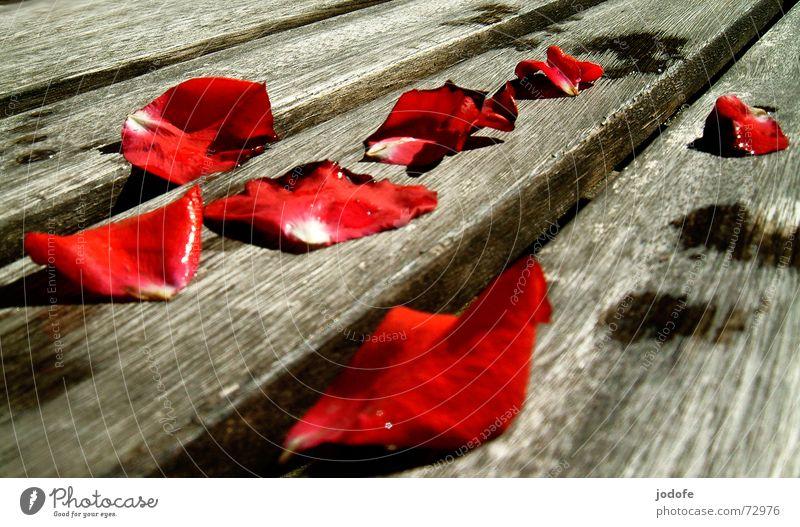 Rosenblätter... Wasser rot Pflanze Sommer Blume schwarz Herbst Tod grau Holz braun nass Wassertropfen Romantik Rose Bank