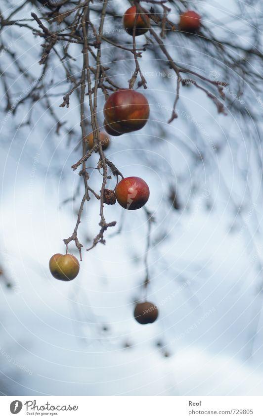 Herbstüberreste Himmel Natur blau alt grün weiß Pflanze Baum rot Wolken Winter Wald Umwelt Herbst Gesundheit Essen