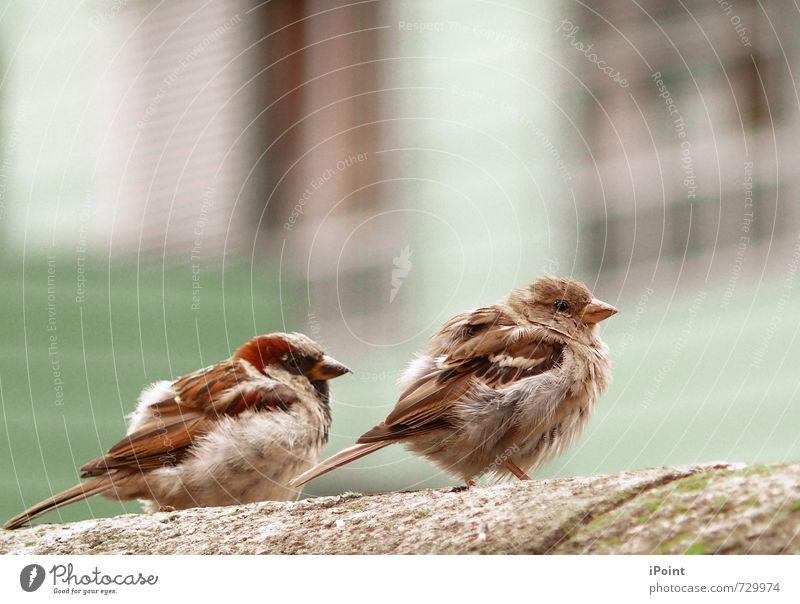 . . . z. w. e. i. s. a. m. k. e. i. t . . . ruhig Tier Umwelt Tierjunges Senior Frühling Freiheit Stimmung Vogel Zufriedenheit authentisch Perspektive Beginn Zukunft Pause Neugier