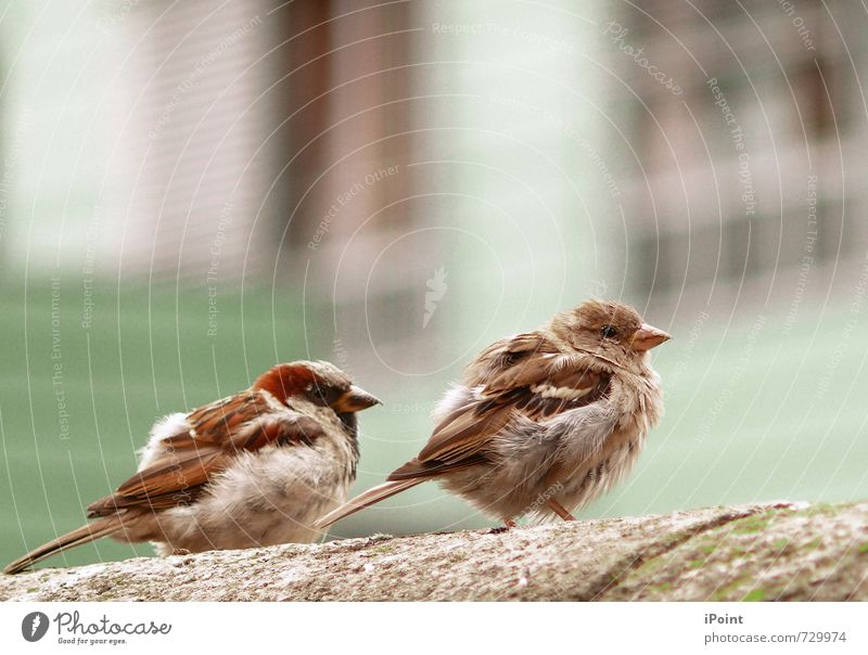 . . . z. w. e. i. s. a. m. k. e. i. t . . . Umwelt Frühling Tier Vogel 2 Tierjunges zweisamkeit Stimmung Zufriedenheit friedlich ruhig authentisch nähe Senior