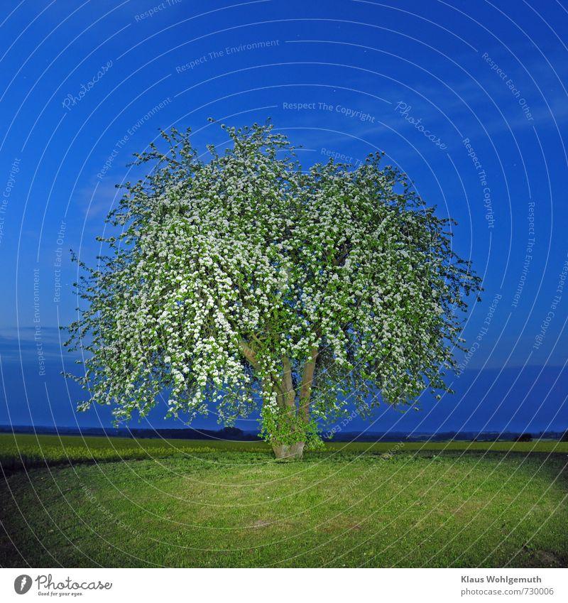 Nachts auf dem Mühlenberg 3 Erholung ruhig Wolkenloser Himmel Nachthimmel Stern Horizont Frühling Schönes Wetter Pflanze Baum Nutzpflanze Birnbaum Raps