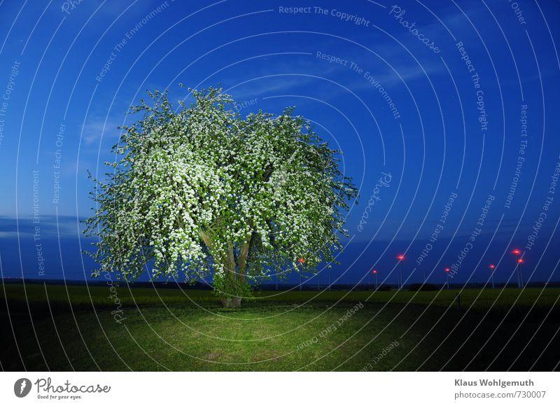 Nachts auf dem Mühlenberg 2 Nachthimmel Stern Horizont Frühling Pflanze Birnbaum Rapsblüte Feld Hügel Blühend leuchten blau grün rot Natur Umwelt