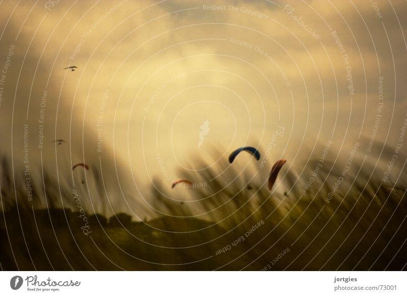 Der Wind, der Wind Sonne Sommer Küste Gleitschirm gleiten fliegen Freude Luft Meer Strand Sturm Sport Himmel Luftverkehr Lenkdrachen