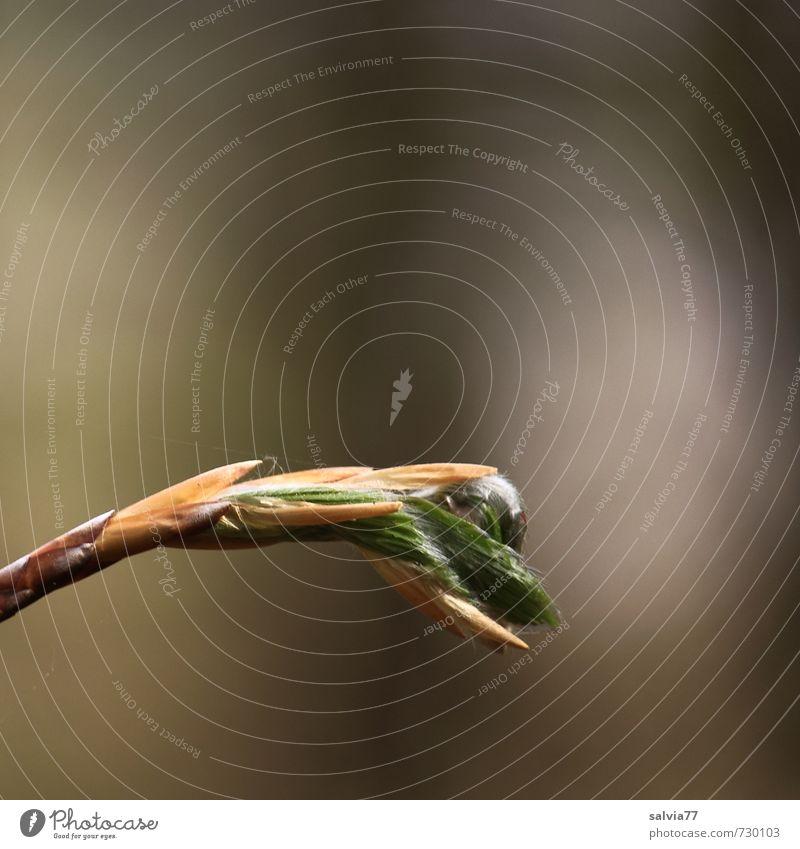 Aufbruch ins Licht Natur grün Pflanze Baum Blatt Ferne Wald Frühling grau braun Wachstum Sträucher frisch ästhetisch Beginn Wandel & Veränderung