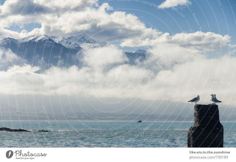 die möwen & der schnee Natur Ferien & Urlaub & Reisen Meer Landschaft Wolken Ferne Umwelt Berge u. Gebirge Schnee Herbst Küste natürlich Freiheit außergewöhnlich Eis Tourismus
