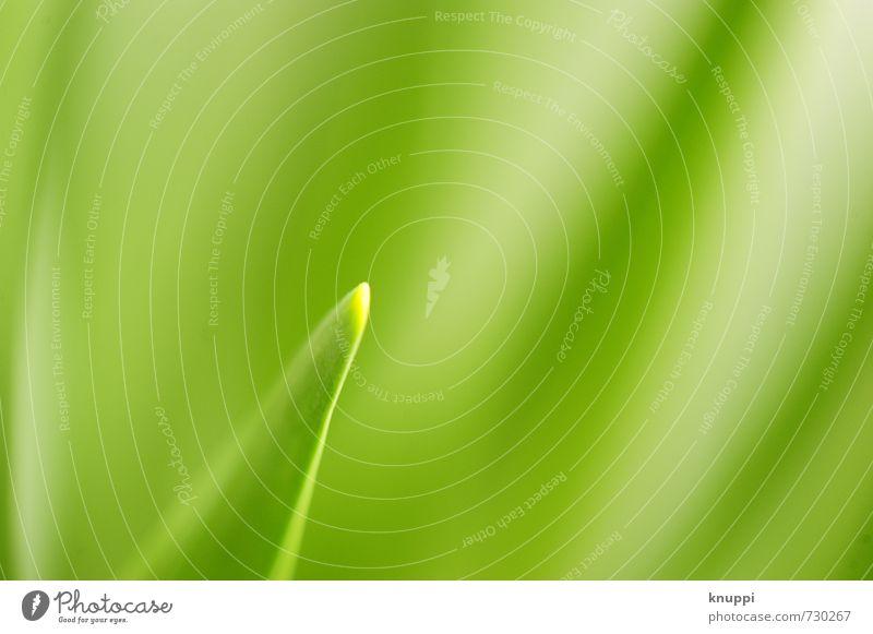 summertime Natur grün Pflanze Sommer Sonne Erholung ruhig Blatt Umwelt Wiese Frühling natürlich hell Garten Park frisch