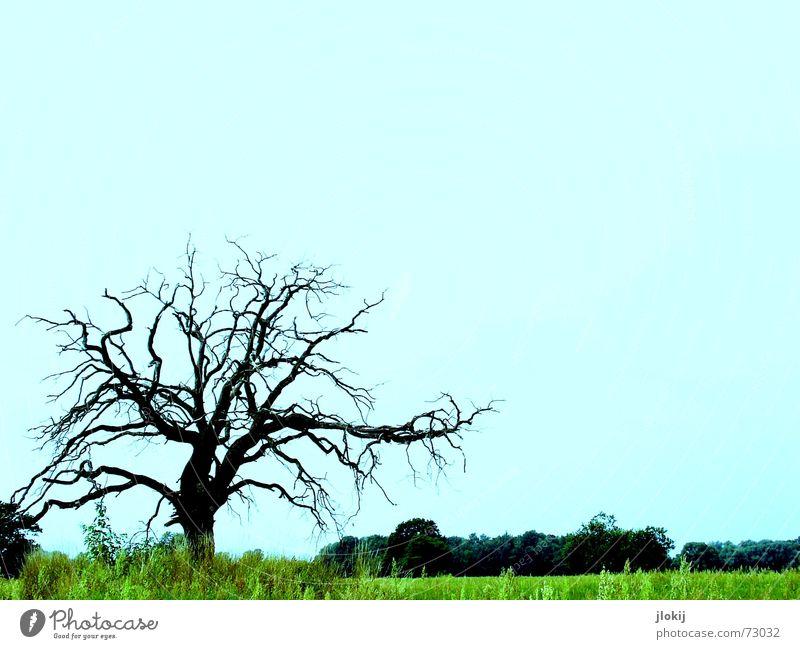 lonely Baum Flußauen grün Einsamkeit Gras Wachstum groß stark Pflanze Natur live Leben schön Vergänglichkeit blau farbschraube tree blue Kontrast alone grass