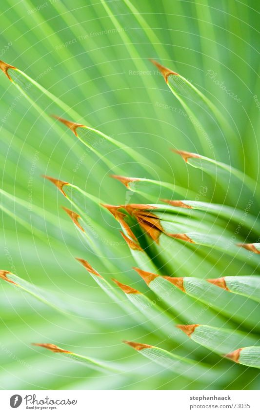 o.T. Natur grün nah Spitze tief Kaktus Stachel