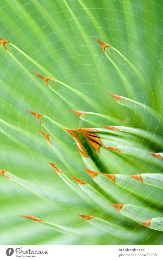 o.T. grün Kaktus nah tief Makroaufnahme Natur Spitze Stachel