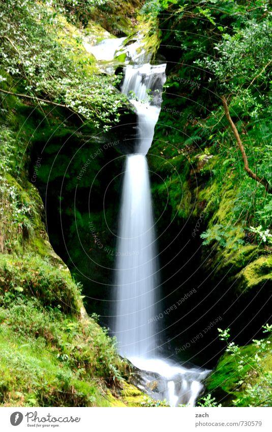 Seide Natur grün Wasser Pflanze Sommer Baum Landschaft ruhig Wald Umwelt Wiese Frühling Gras Felsen Idylle Sträucher