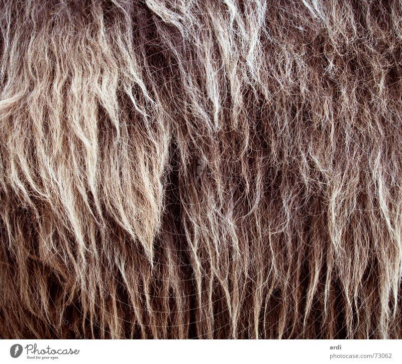rasta Tier Haare & Frisuren Wärme Physik Fell dick kuschlig Wolle Rastalocken üppig (Wuchs) Zottel