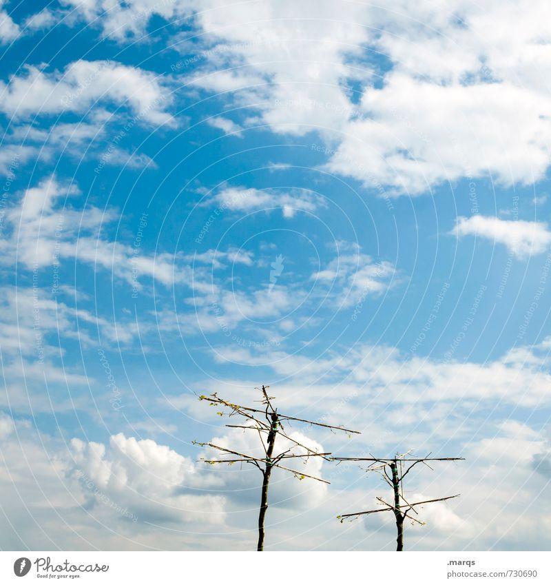 Kahlschlag Ausflug Natur Urelemente Himmel Wolken Frühling Sommer Schönes Wetter Baum Erholung einzigartig schön blau Umwelt Zusammenhalt kahl 2 Farbfoto