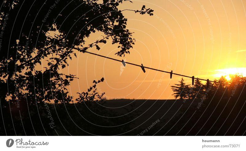 Morning has broken Baum Sonne Wärme orange Seil Physik Wäscheklammern