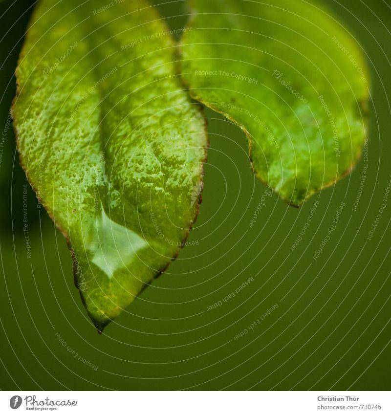 Wasserbad Natur grün Pflanze ruhig Blatt Tier kalt Umwelt Wiese Frühling Glück braun Garten träumen Park