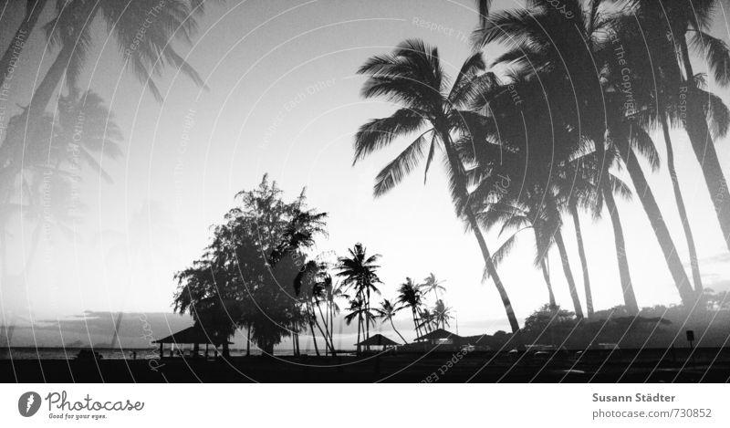 hawaii, ick träum von dir. Baum Urwald Küste Meer ästhetisch Palmenwedel Palmenstrand Kauai Hawaii Doppelbelichtung träumen Strand Pazifik Schwarzweißfoto