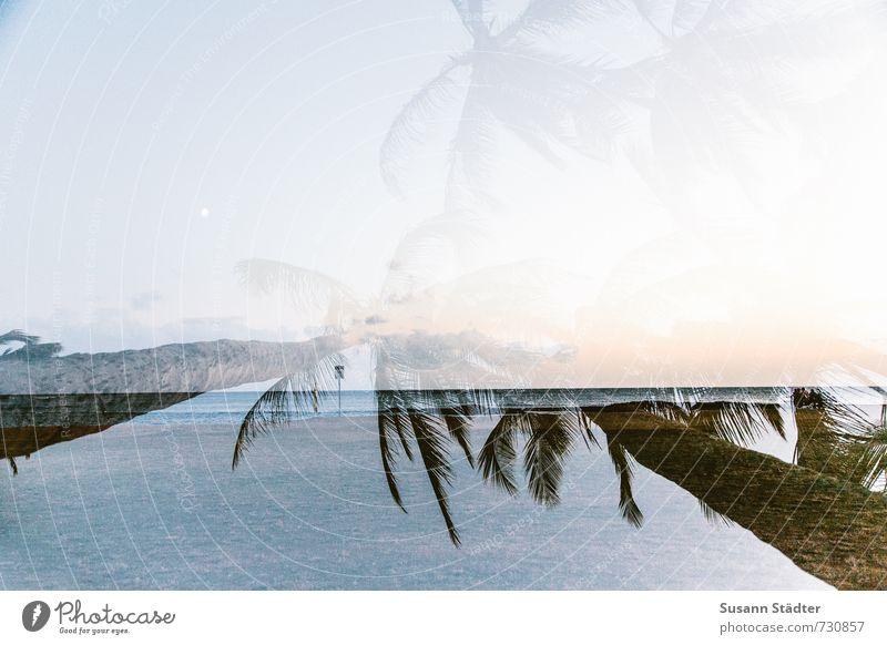 in dreams Natur Mond Baum Urwald Küste Meer Palme Hawaii Kauai Paradies Doppelbelichtung Strand träumen Himmel Farbfoto Außenaufnahme Experiment abstrakt Abend