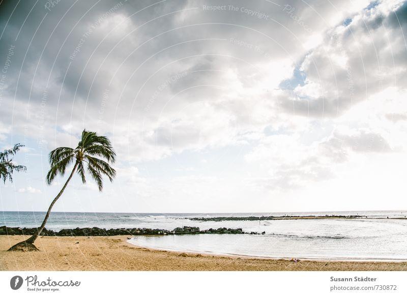 poipu beachpark Wolken Sommer Schönes Wetter Park Wellen Küste Bucht ästhetisch Kitsch Palme Kauai Hawaii Strand Einsamkeit Sandstrand Riff Buhne Farbfoto