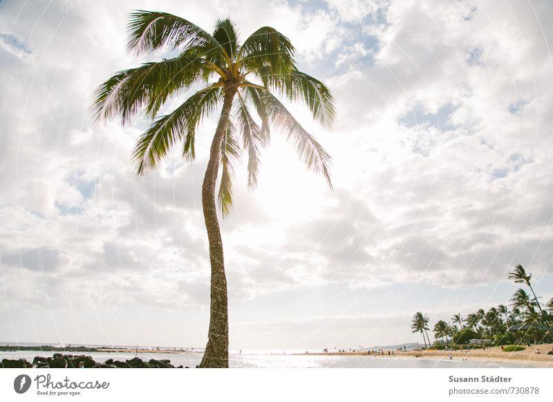 palm on kauai Baum Wolken Strand träumen Bucht exotisch Palme Paradies traumhaft Oase Hawaii Badeurlaub Palmenwedel Kauai