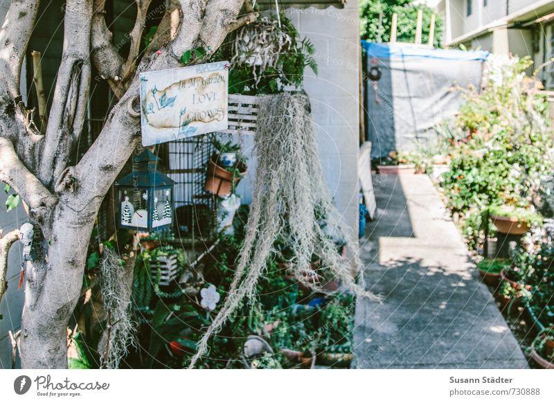 in my garden, love grows heimwerken Hausbau Dekoration & Verzierung Kleinstadt Einfamilienhaus Hütte Gebäude Mauer Wand niedlich wild Garten Honolulu Hawaii